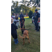 Young boy continues playing tug of war with K-9 dog